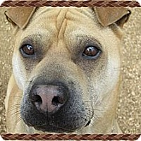 Adopt A Pet :: Fawnzie - Houston, TX