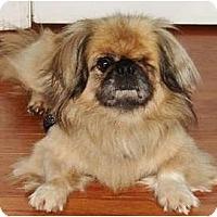 Adopt A Pet :: Odin - Virginia Beach, VA