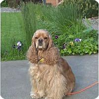 Adopt A Pet :: Jaz - Tacoma, WA