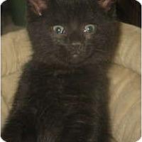 Adopt A Pet :: Inka - Acme, PA