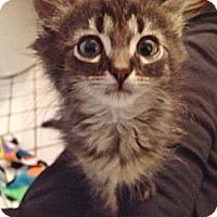 Adopt A Pet :: Moeky - Byron Center, MI
