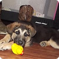 Adopt A Pet :: Bebe - Huntsville, TN