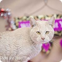 Adopt A Pet :: Sam - Fountain Hills, AZ