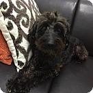Adopt A Pet :: Wasabi