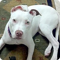 Adopt A Pet :: Gator - Cincinnati, OH