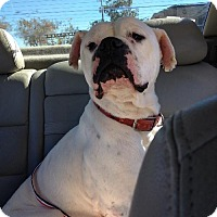 Adopt A Pet :: Becker - Brentwood, TN
