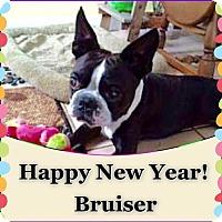 Adopt A Pet :: Bruiser Brody - various cities, FL
