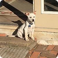 Adopt A Pet :: Tobias - Houston, TX