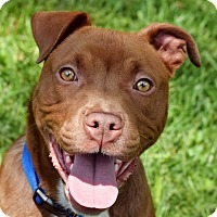 Adopt A Pet :: Otto - Memphis, TN