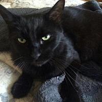 Adopt A Pet :: Tyson - San Jose, CA