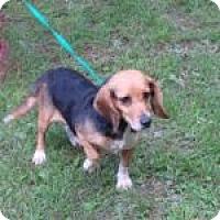 Adopt A Pet :: Summer - Dumfries, VA