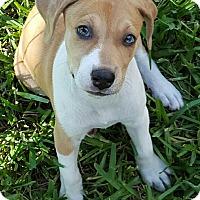 Adopt A Pet :: Grandview#4F - Orlando, FL