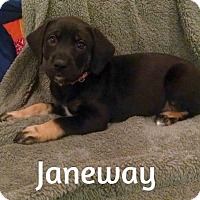 Adopt A Pet :: Janeway - Knoxville, TN