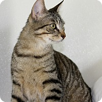 Adopt A Pet :: Qunicy - Grinnell, IA