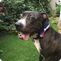Adopt A Pet :: PB JOE - Anaheim Hills, CA