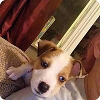 Adopt A Pet :: Hope - Hanover, PA