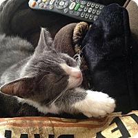 Adopt A Pet :: Pate - Columbus, OH