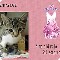 Adopt A Pet :: Lawson - Jefferson City, TN