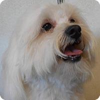 Adopt A Pet :: Dexter - Yucaipa, CA