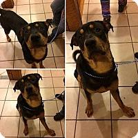 Adopt A Pet :: Max - Broadway, NJ