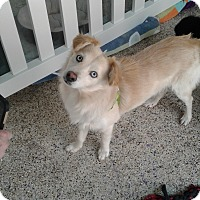 Adopt A Pet :: Micky - Thousand Oaks, CA