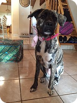 Hound (Unknown Type) Mix Dog for adoption in Key Biscayne, Florida - Chloe