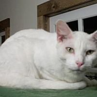 Adopt A Pet :: Cream - Lacon, IL