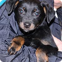 Adopt A Pet :: Lanny - Glastonbury, CT