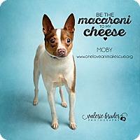 Adopt A Pet :: Moby - Mount Laurel, NJ