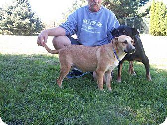 German Shepherd Dog/Labrador Retriever Mix Dog for adoption in Germantown, Maryland - Gretel