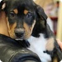 Adopt A Pet :: Maddie - Justin, TX