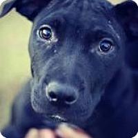 Adopt A Pet :: Tyson - Justin, TX