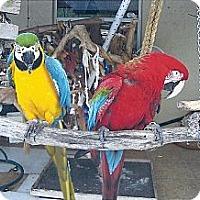Adopt A Pet :: Peppy & Tinker - Punta Gorda, FL