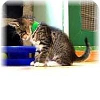 Adopt A Pet :: Ronnie - Shelton, WA