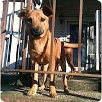 Adopt A Pet :: Sweet Radcliffe - Fulton, MD