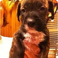 Adopt A Pet :: Dottie - Ooltewah, TN