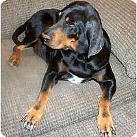 Adopt A Pet :: Cardamom - Phoenix, AZ