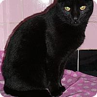 Adopt A Pet :: Jasmine - Springfield, PA