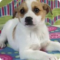Adopt A Pet :: Priya - Hamburg, PA