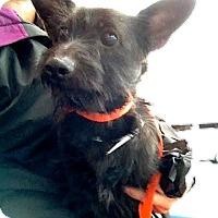 Adopt A Pet :: Forest - San Francisco, CA