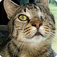 Adopt A Pet :: Tilt-AWESOME boy! - Hadley, MI