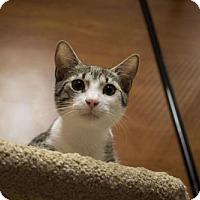 Adopt A Pet :: Archie - Savannah, GA