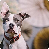 Adopt A Pet :: Miner - Portland, OR