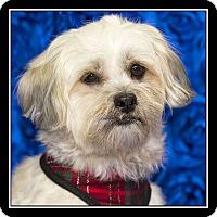 Adopt A Pet :: Selena - San Dimas, CA