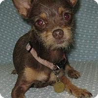 Adopt A Pet :: Tootsie Roll - San Diego, CA