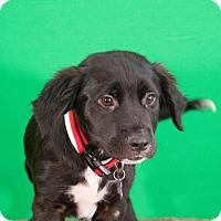 Adopt A Pet :: Lake - Berkeley Heights, NJ