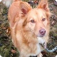 Shepherd (Unknown Type)/Terrier (Unknown Type, Medium) Mix Dog for adoption in Princeton, Kentucky - Stevie