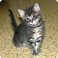 Adopt A Pet :: Apollo - Los Angeles, CA