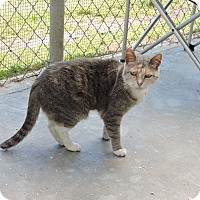 Adopt A Pet :: Tabitha - Washington, GA