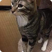 Adopt A Pet :: MURPHY - Brea, CA
